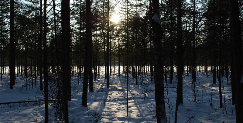 bosque-en-la-sombra