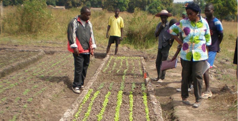 cultivos-fao-africa