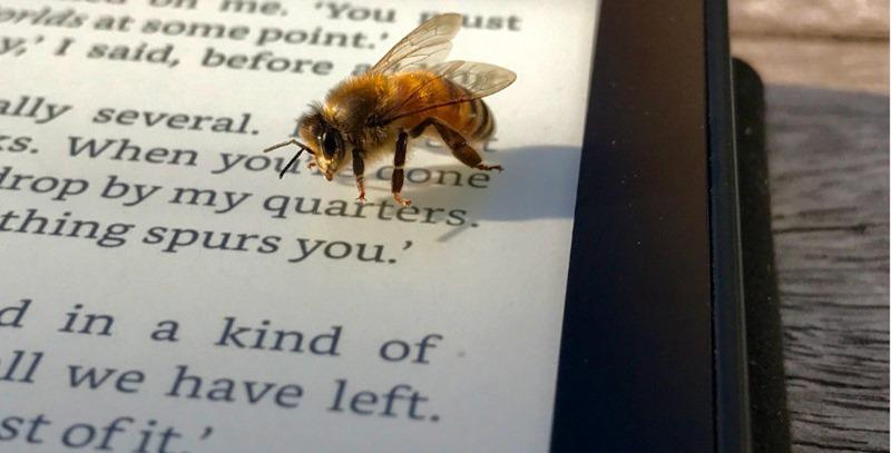 ereader con abeja